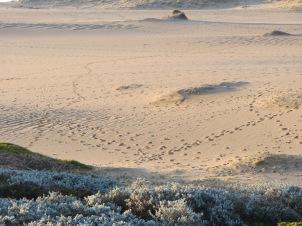 1-winter-abbotts very tracked