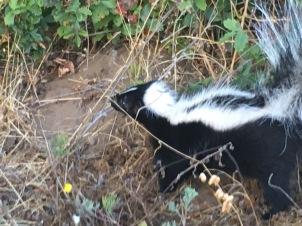 1-winter-skunk baby