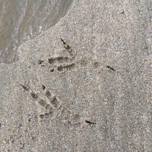 2-spring-raven tracks at water