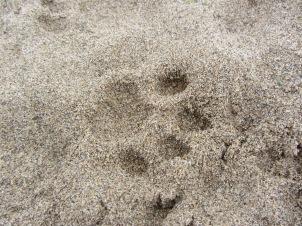3-summer 3 clear bobcat