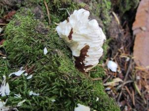 4-Signs-fungus chew copy