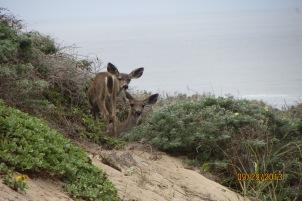 7-Signs-deer browsing